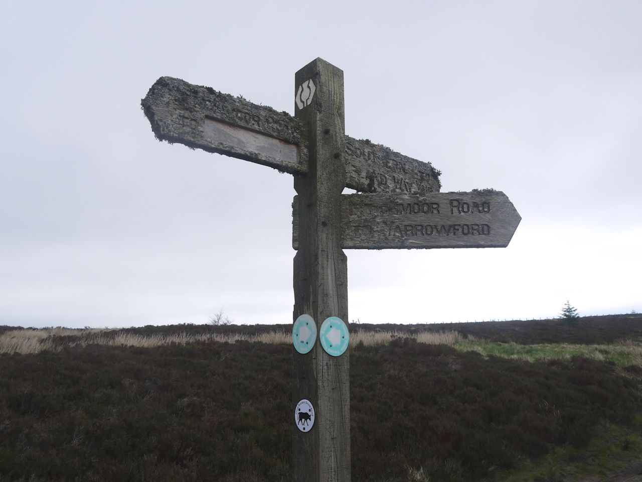 Moss covered signpost