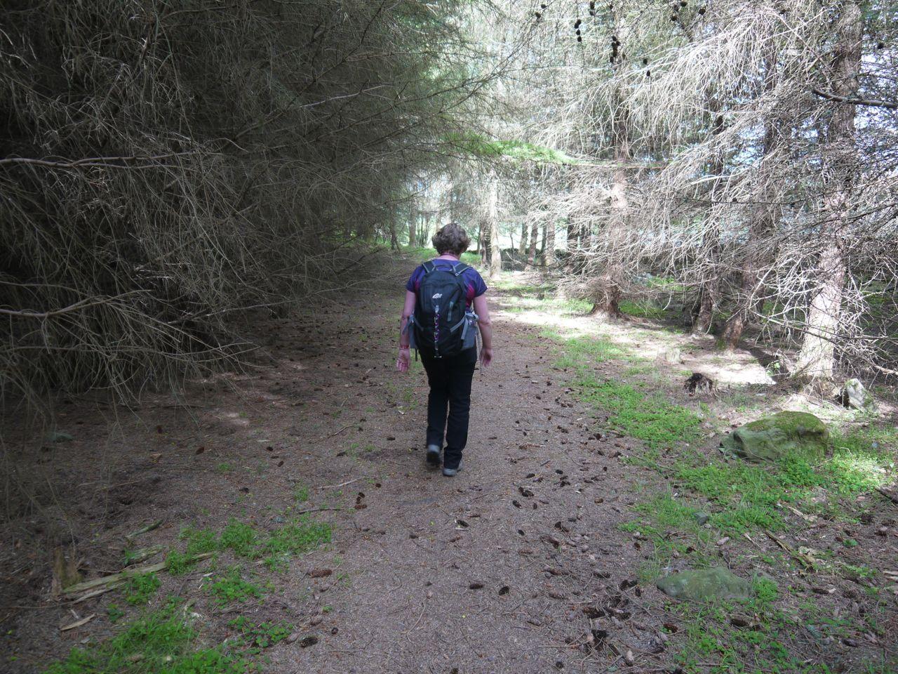 Woods near Gala