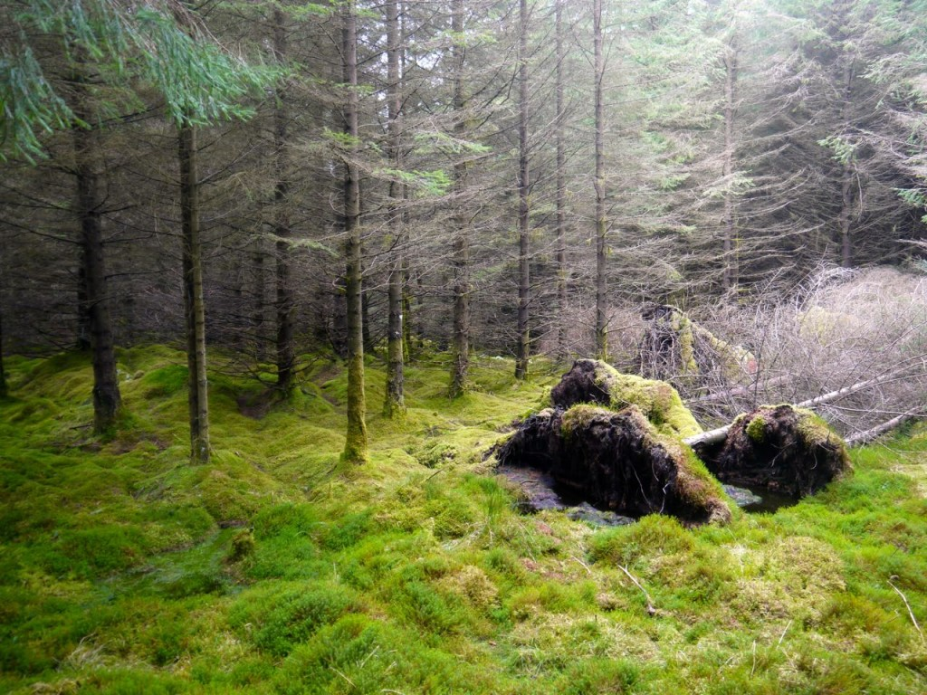 Moss in Carrick Forest