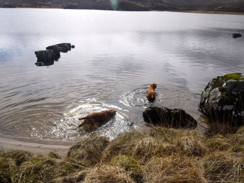 Swimming in Cornish Loch