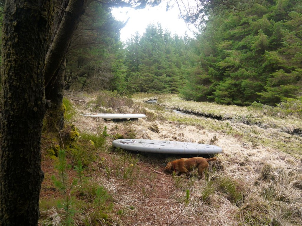 Rosnes Benches in Carrick Forest