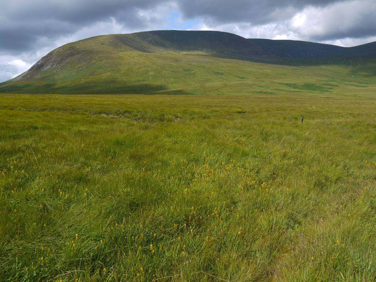 Knee of Cairnsmore, Cardoon Burn in mid-distance, Bog Asphodel in the foreground