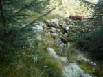 Lichen on Gawin Moor Cairn