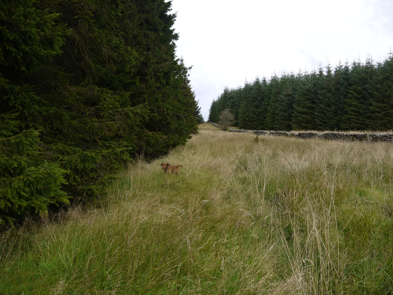 Forest break leading to Souter's Grave