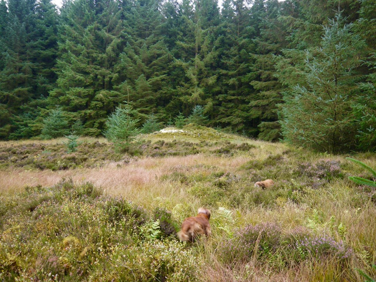 Gawin Moor cairn