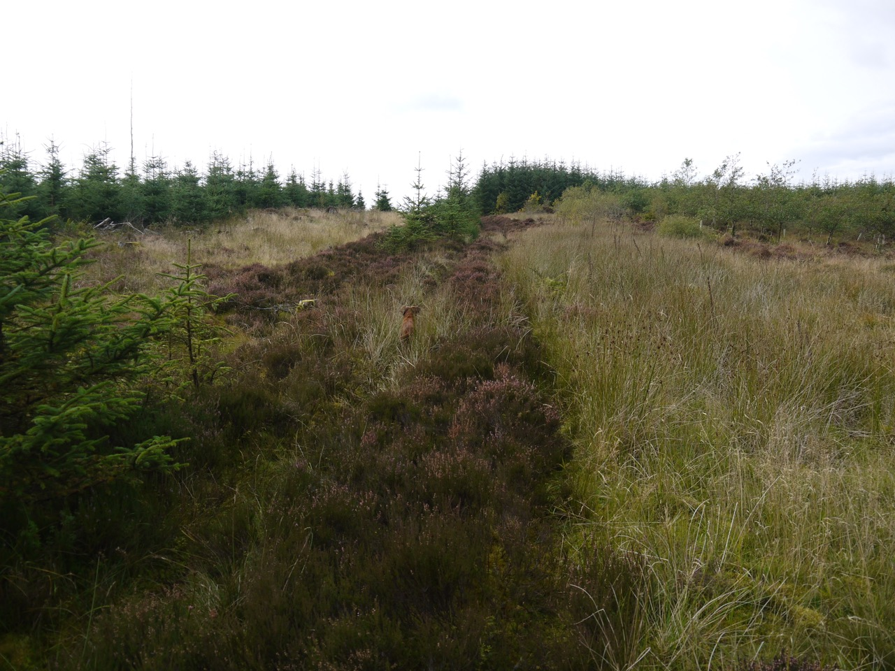 More of Gawinmoor Road