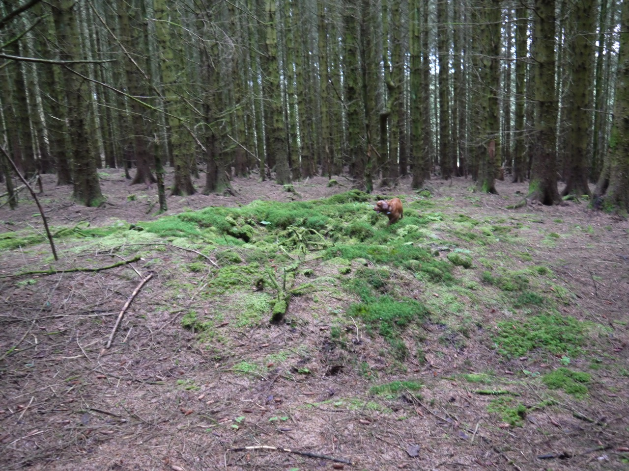 Remains of the second cairn in the forest