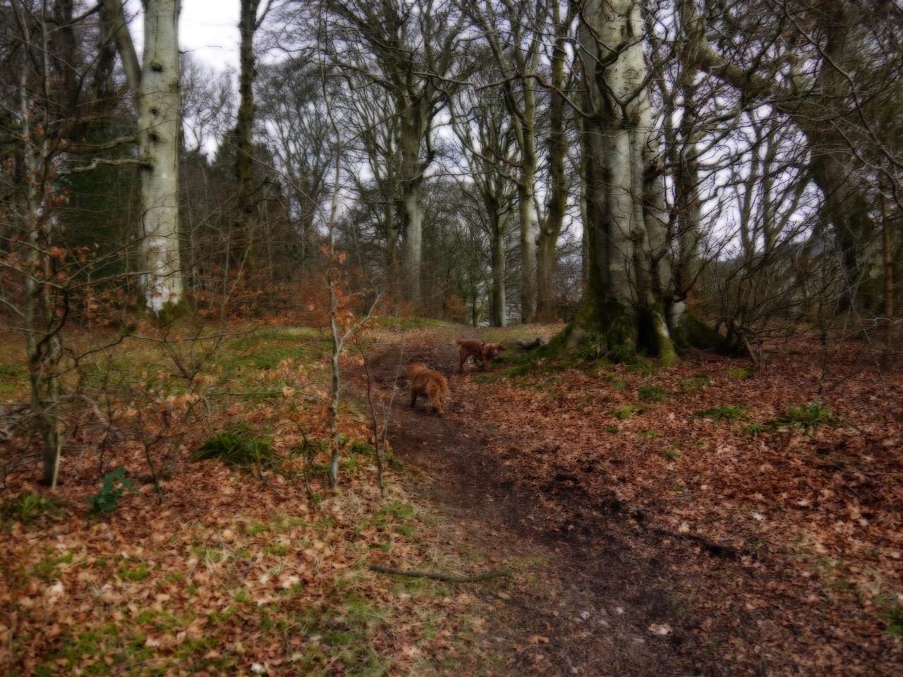 Drumcrieff Wood