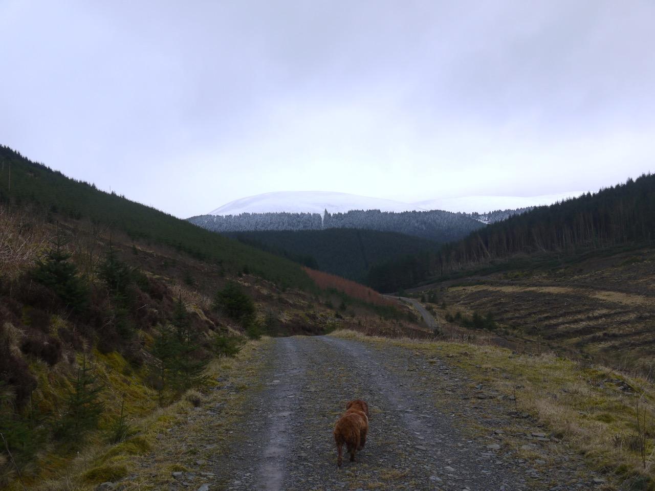 Loch Fell in the distance