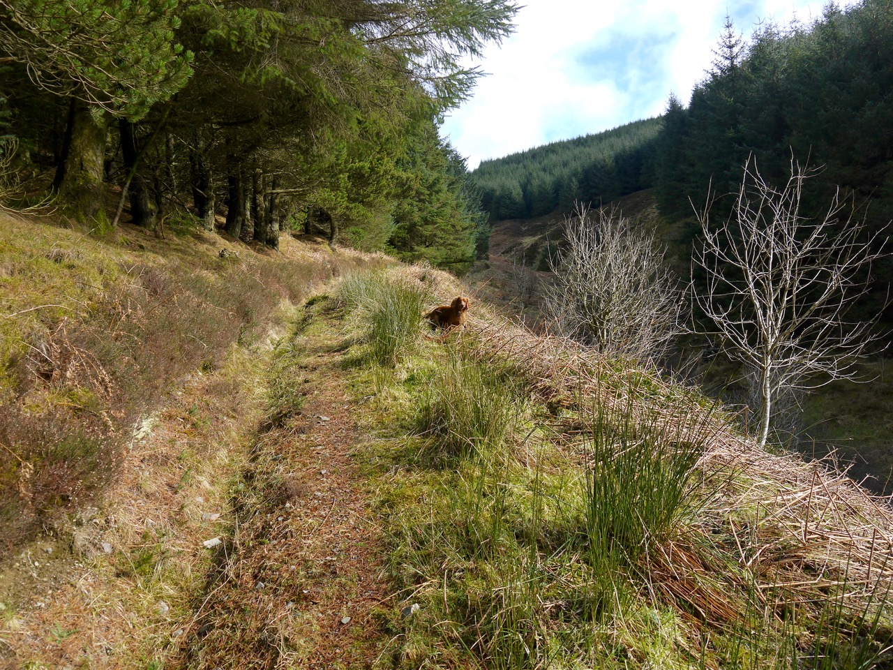 Garrogill path