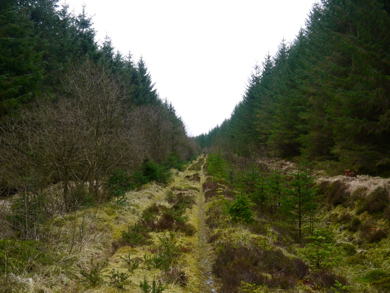 Path on Lamblair Knowe