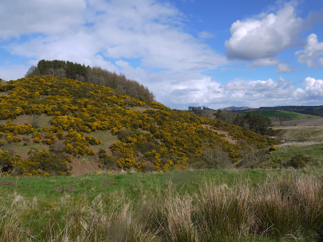 Gorse covered Wiltonburn hill