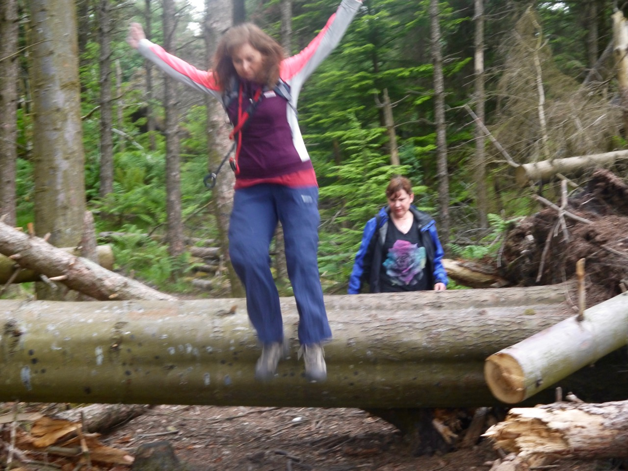 Jumping the fallen trees