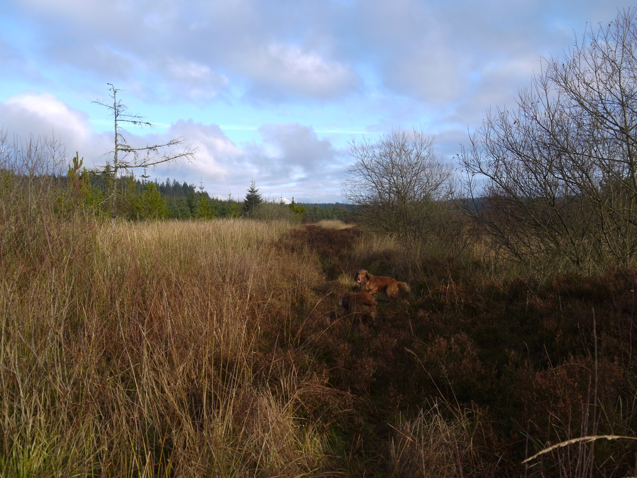 The faint track beside the railway