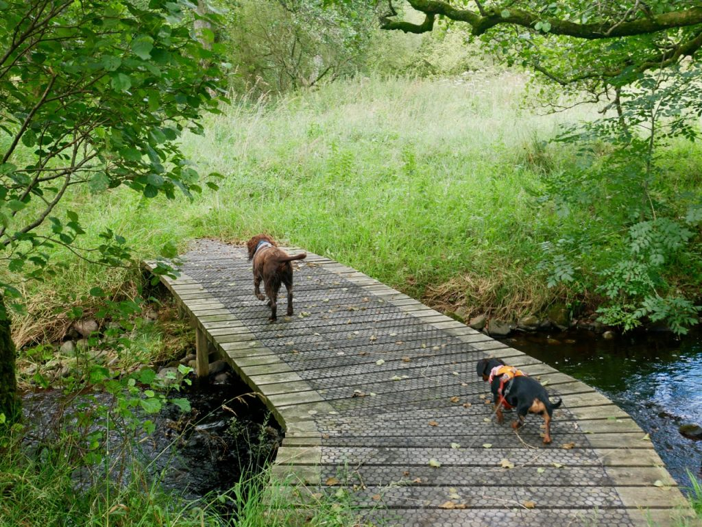 dogs on a footbridge