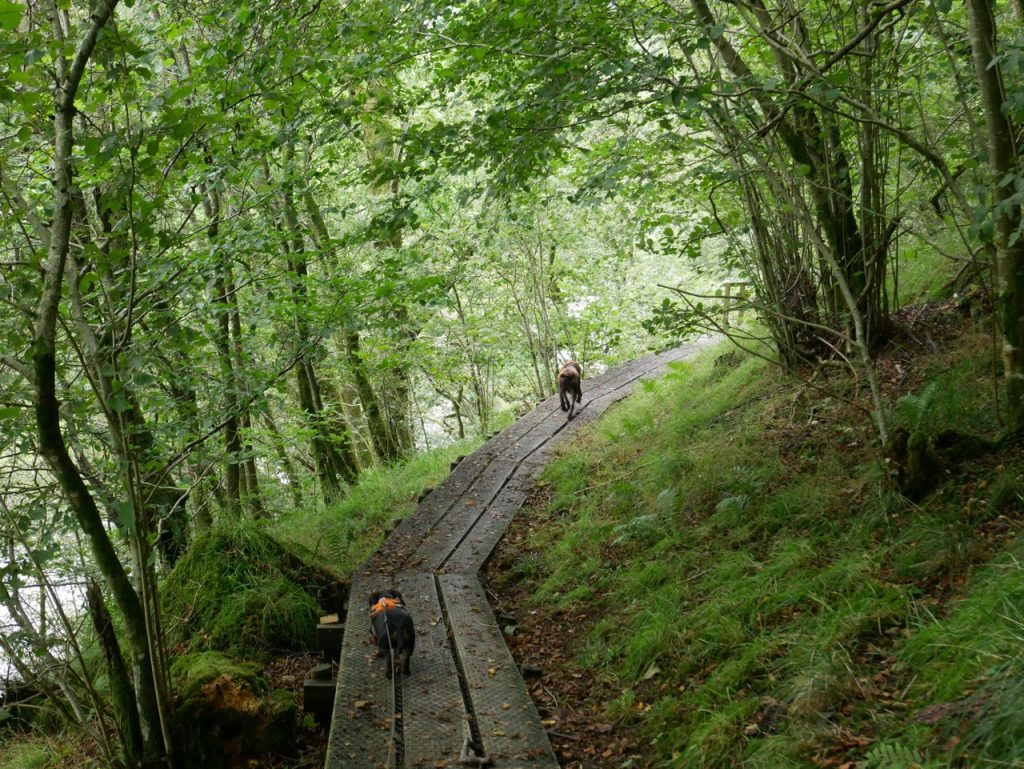 wooden walkway with dogs