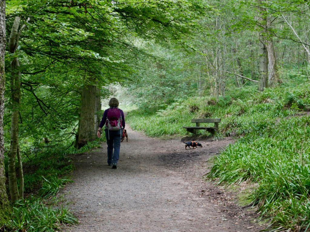 Woodland near Failford